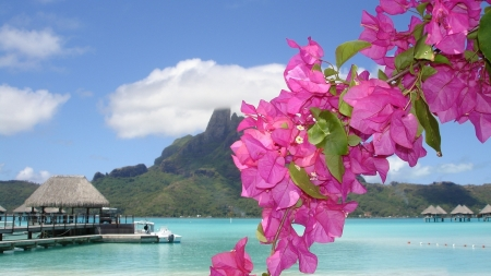 Pink Flowers on Paradise Beach - clouds, beach, boats, paradise, mountains, flowers, river, nature, pink
