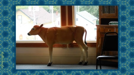 Yikes! There's a Calf in My Study!!! - catt1e, border, aqua blue, window, brown, frame, calf, border1ine, Amish Country, aquamarine, desk