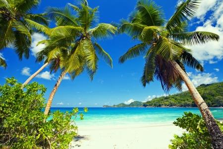 Island Em 2020