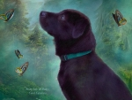 Young Lab and Butterflies