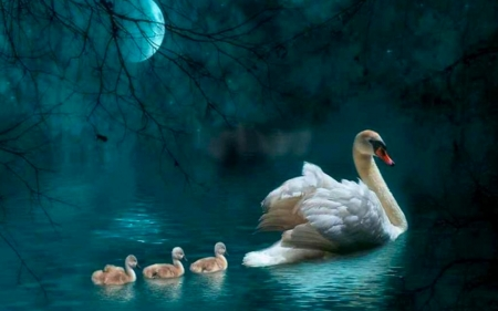 Swans By Moonlight >> Swans By Moonlight Birds Animals Background Wallpapers On