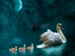 Swans by Moonlight