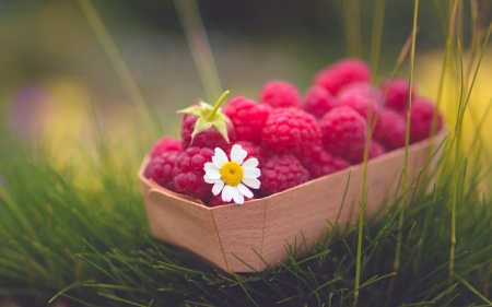 Delicate Raspberries - raspberries, red, photography, grass, basket