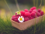 Delicate Raspberries