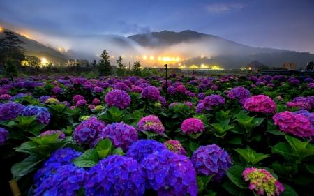 Elegant Flowers Landscape