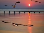 Seagulls and Sunset