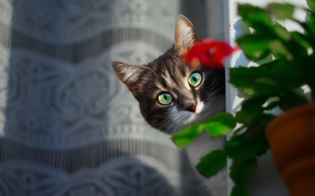 Cat Behind the Flower - flower, look, hide, cat