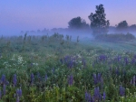 Midsummer Meadow in Latvia