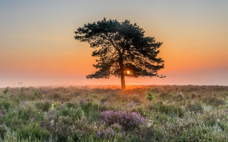Sunset in England - sunset, tree, meadow, England