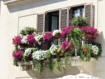 Windows with Flowers in Italy