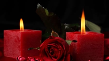 red harmony - flower, candle, flame, rose