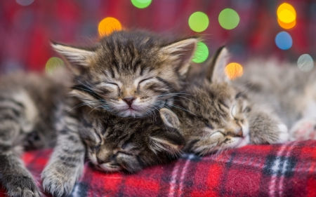 Sleeping kittens - bokeh, sleep, evgeny egg, paw, cat, pisici, kitten