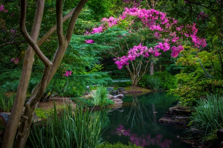 Pond flowers - pretty, beautiful, park, trees, lake, pond, tranquil, serenity, flowers, peaceful, garden, reflection