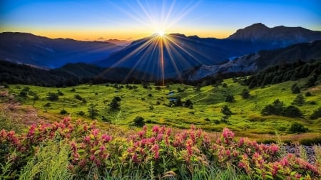 Mountain Meadow - mountains, nature, grass, flowers, meadow, dawn