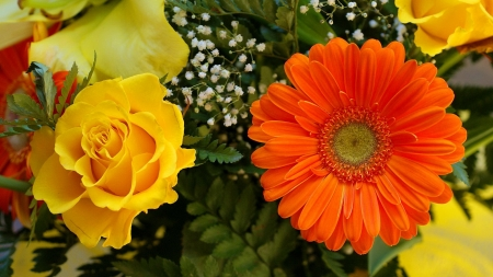 Rose and Gerbera - bouquet, rose, closeup, gerbera, flowers, nature