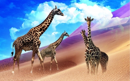 Colorful Giraffes - colorful, stately, sand dunes, Digital arts, Giraffes, animals