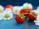 Strawberries And Daisies