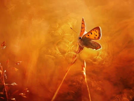 Butterfly - Nature, Butterfly, Macro, Light
