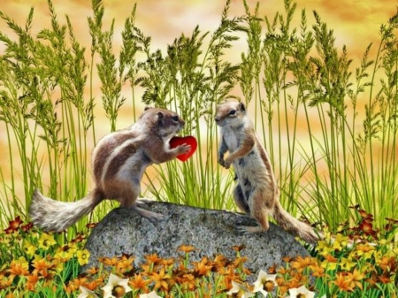 Chipmunk Lovers - cute, nature, grain, field