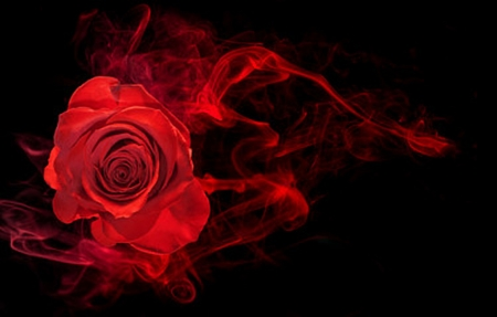 Red Rose - 3D and CG & Abstract Background Wallpapers on ...