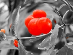 Berries In Red