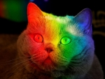 Multicoloured cat