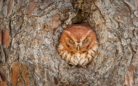 Hidden Owl - Hidden, Owl, Bird, Browns, Animals