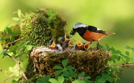 Birds in Nest - birds, feeding, young, nest