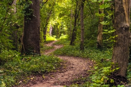 Trail To The Light Forests Nature Background Wallpapers On Desktop Nexus Image 2400598