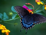 Wonderful Butterfly