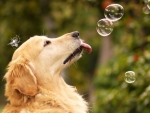 Licking Bubbles