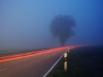 Dark Foggy Road