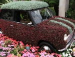A Mini covered in flowers at the 2012 Chelsea Flower Show