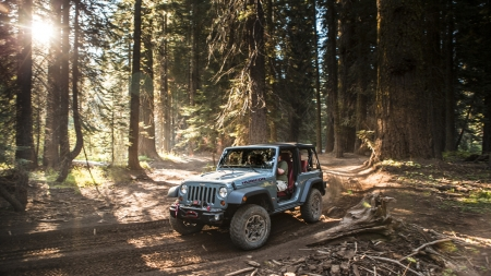 jeep rubicon - forest, tree, rubicon, jeep