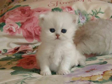 cute baby kitten - cute, kitten, cats, baby, animals