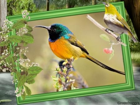 Beautiful Bird Birds Animals Background Wallpapers On Desktop
