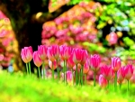 Pink Tulips Love
