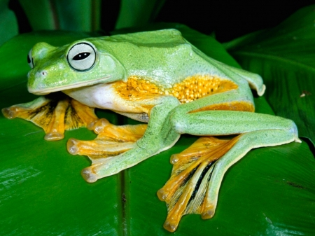 Beautiful Frog