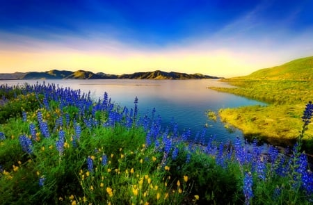 Texas bluebonnets - Texas, bluebonnets, wildflowers, flwoers, river, beautiful, sky, lake