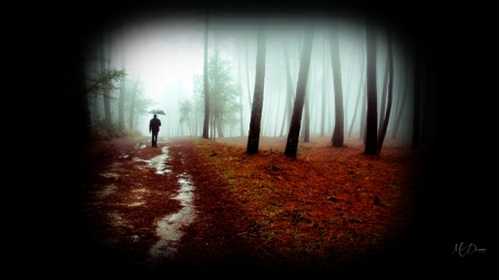 Walk in Fall Woods - Firefox theme, forest, woods, man, collage, fog, mist, tranquil, serene, path, peaceful, grove, rain, walk