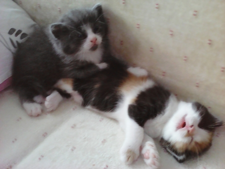 Cute kittens - kittens, cute, little, cats