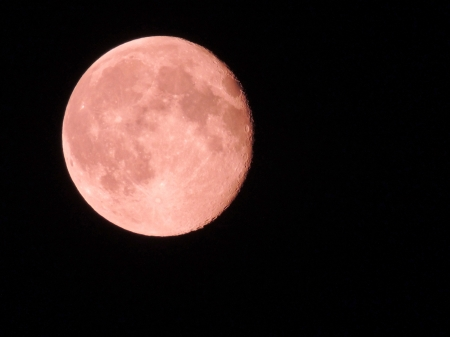Pink Super Moon - Pink, Super Moon, Sky, Moon, Space, Photography