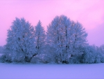 Twilight Clouds over Snowy Trees