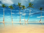 Palm Trees on Sandy Tropical Beach