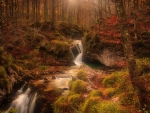 Beautiful Stream in Autumn Forest