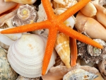 Seashells and Sea Stars