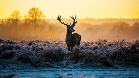 Dominant Male - sunrise, ice, late autumn, tree, wildlife