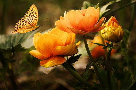 Summer Flowers - butterfly, yellow, petals, blossoms, insect