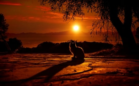 Cat Silhouette - Golden Sky - red, sun, orange, yellow, mountain, 3847x2400, 4k, striking, Elena Dudina, cat, trees, silhouette, adventure, heat, cute, tree, serene, peaceful, meow