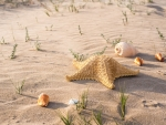 Shells & Starfish on the Sand